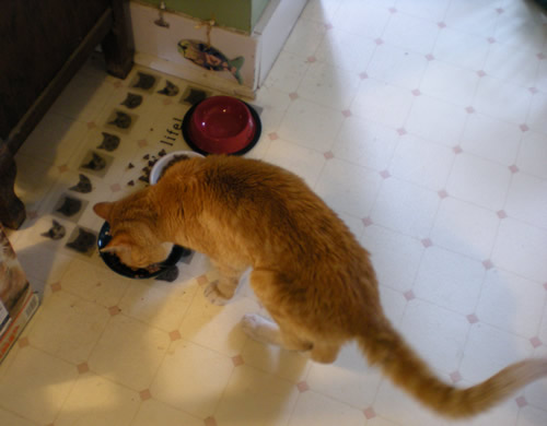 Joe Fish, our foster cat, the best cat. Ever!