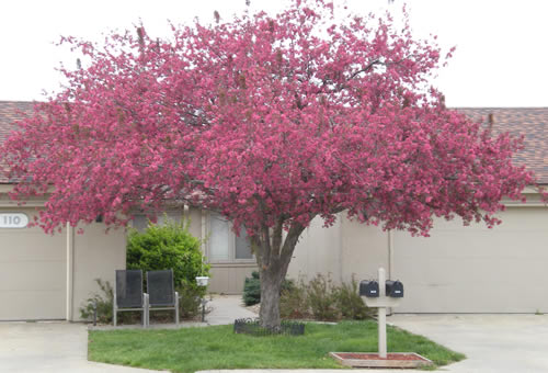 Grey day, pink tree