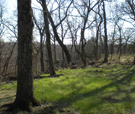 The woods are so beautiful when the grass is greening up but the trees are still bare.