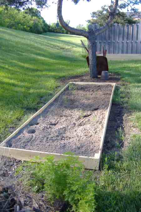Louie and I made a raised bed for the asparagus.  Looks like it will make it.  Thanks for the encouragement, Deb.  Now, if I can just keep the neighbor's dogs out!