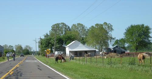 Usually there's nothing much happening on the back road to our place.  Today there were bikes, a car, a horse trailer up in the driveway of the farm, and a loose horse.