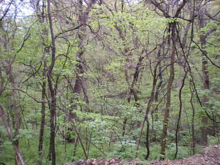 Did you know we had rainforests here in Kansas?