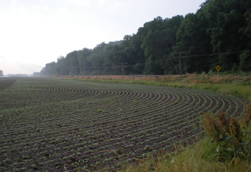 The soybeans are coming up in the fields.