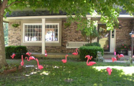 Yard full of flamingos