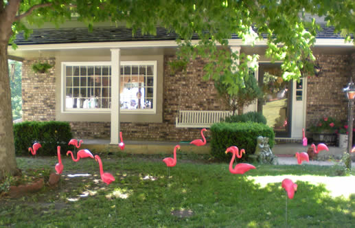 Yard full of flamingos