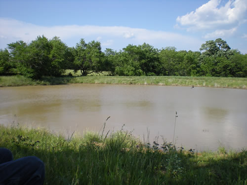 This is the small pond on the north edge of our place.  It's just a round farm pond.  In spring and summer we stop on our dog walk and sit in folding chairs here for a while, until Buster gets bored and starts barking at us to get a move on.