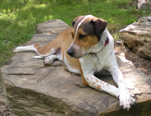 Dog lying on rock, relaxed