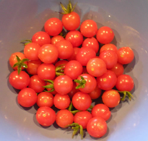 Cherry tomatoes, of which we have several million.