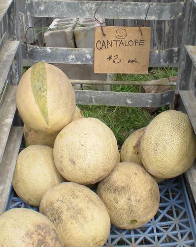 Melon season, what a pleasure.