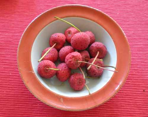 This is Kousa fruit.  They look a little like really old strawberries, but they come off the Kousa dogwood.