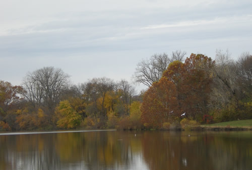 The color of the leaves this fall has been unusually beautiful.  I can't say the same for the constant grey of the sky.