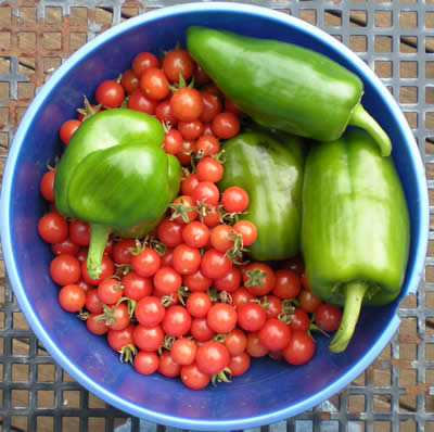 The cherry tomatoes are still producing like crazy.  I think these are the last peppers, though.  We are still getting arugula, lettuce and cilantro, and I have high hopes for the fennel.