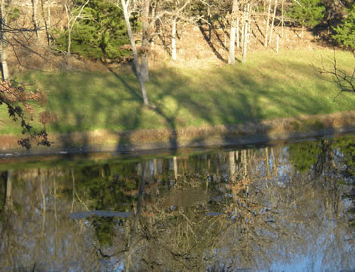 Trees every which way: as shadows, in the foreground, in the background, reflected in the pond.