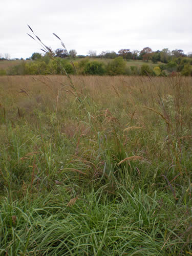 Here's a closer look at the grasses.  Isn't that big bluestem cool?