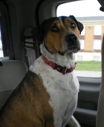 Buster in the car again