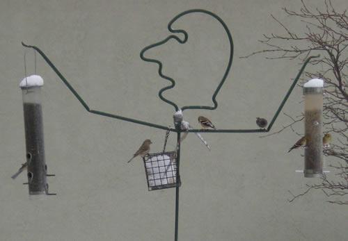 Birds at human-shaped birdfeeder