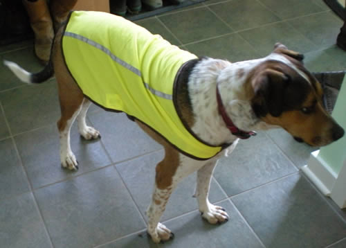Dog in reflective yellow coat