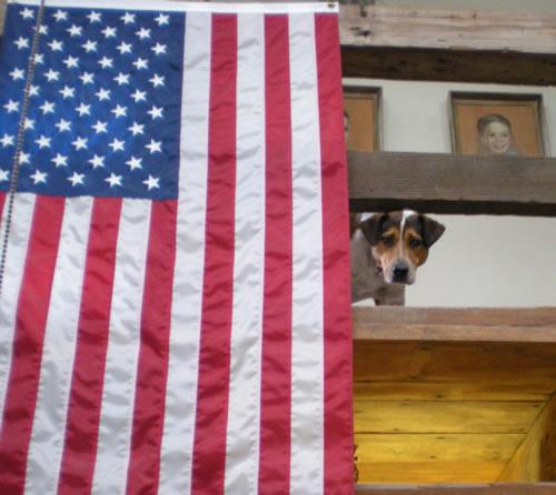 dog on balcony behind US flag