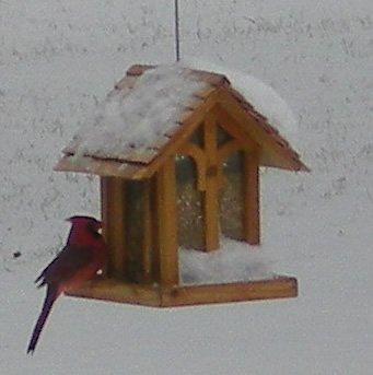 Cardinal at snow-covered bird feeder