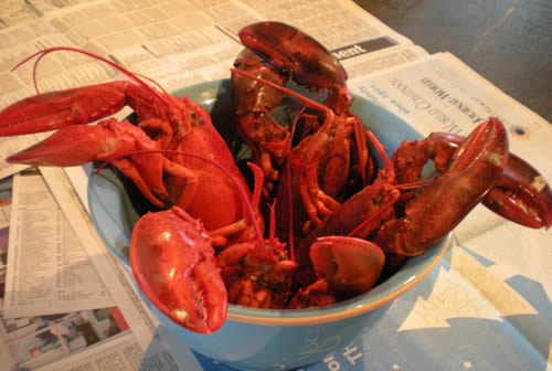 Four cooked lobsters in a blue bowl