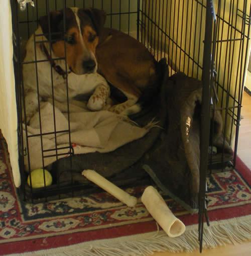 dog in metal crate, open door, bones in front of the door