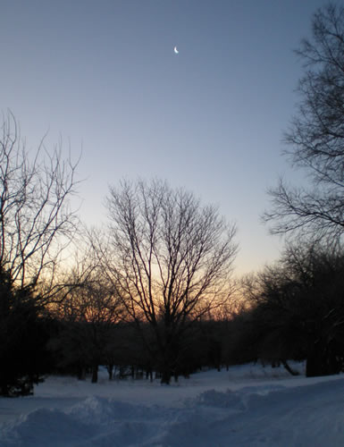 sunrise through the trees on a snowy morning, fingernail moon in the sky