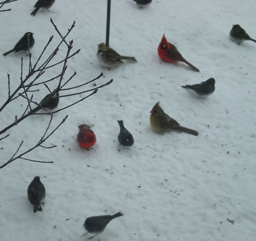 Birds in the snow under birdfeeder