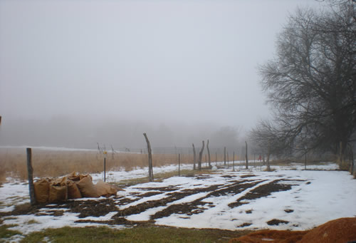 Garden on a foggy day in winter, snow on the ground