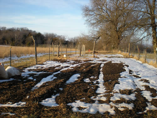 Winter vegetable garden, sunny sky