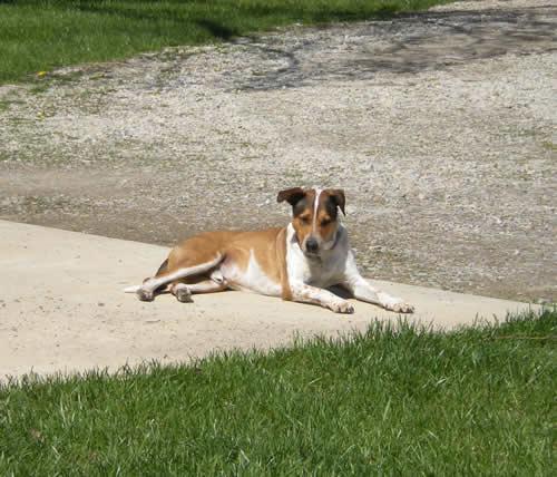 Dog lying in sunny driveway