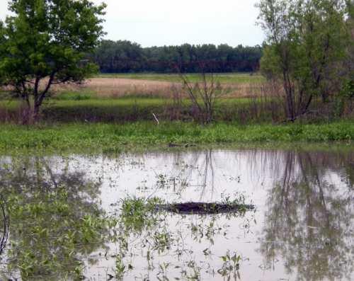 wetland, muskrat lodge