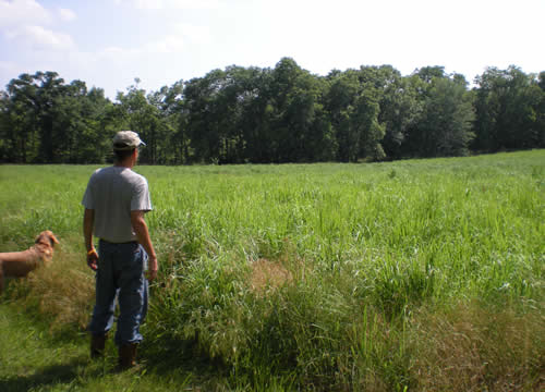 lush green field of tall grass