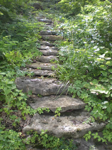 Stone steps up in the woods