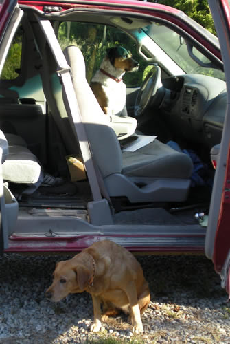 one dog in driver's seat of truck, another on ground outside the door.