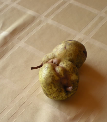 two misshapen pears on table