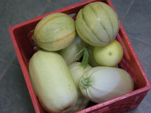 crate of squash and melon