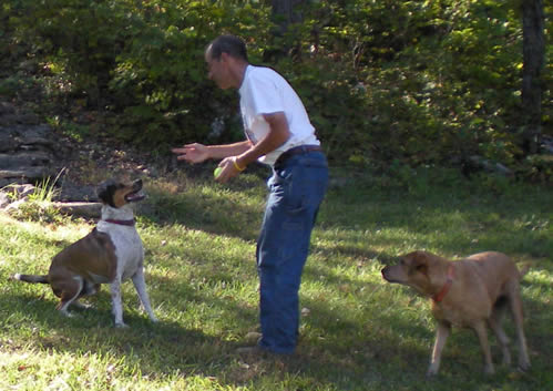 Man with tennis ball in hand, alert dog in front of him, other dog behind
