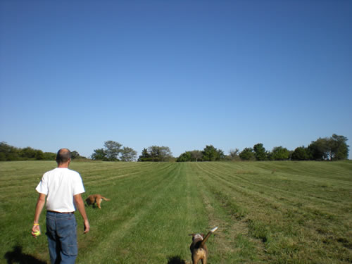 man and two dogs walking across a field