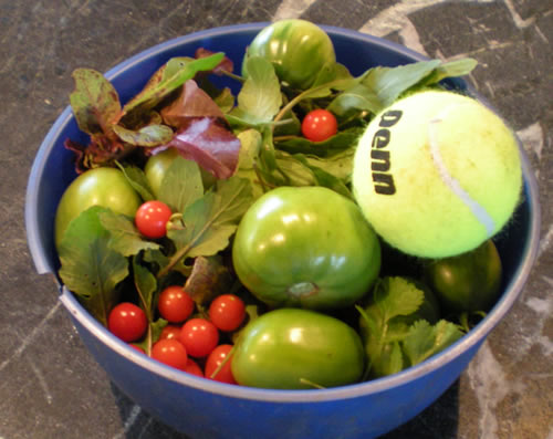 Bowl of vegetables with tennis ball