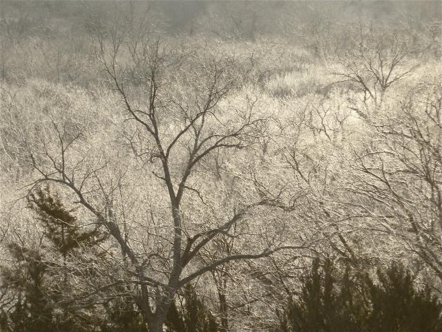 January 14.  Frosty woods.