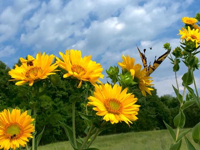 bees n butterflies